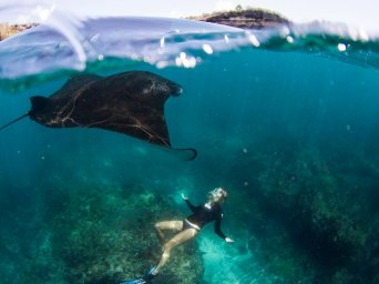 Snorkling with Manta Ray, Manta point, Manta bay, Snorkling manta, Manta ray, Manta point 66, Snorkling in Lembongan, Lembongan Snorkeling