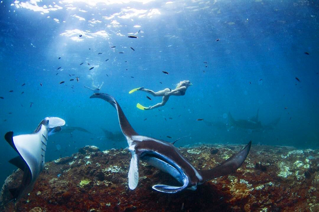 Big Snorkling Safari Tour
